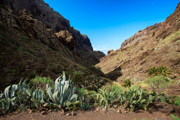 Beautiful Tenerife landscape - Masca Valley