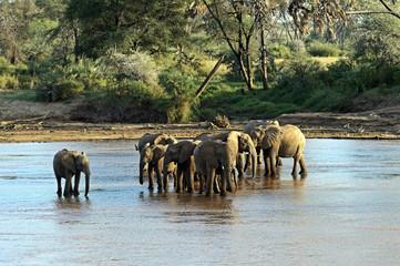 Wall Mural - Afrikanskfy Elephant in Africa