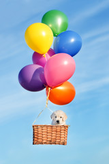puppy flying in a basket with air balloons