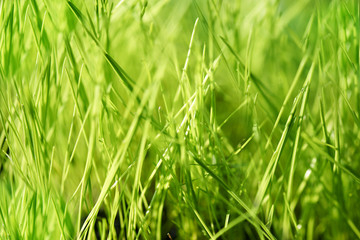 Blurry background with green grass.
