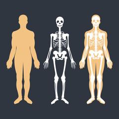 Human body and skeletal system flat illustrations set. Body silhouette, skeleton and bones inside body