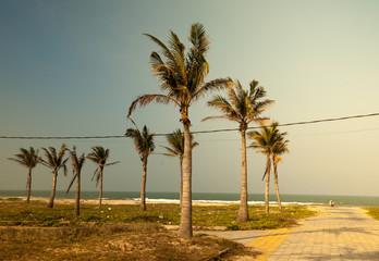 Palms against blue sky on a beach