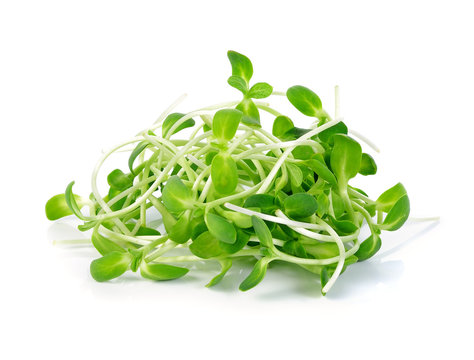 sunflower sprouts isolated on white background