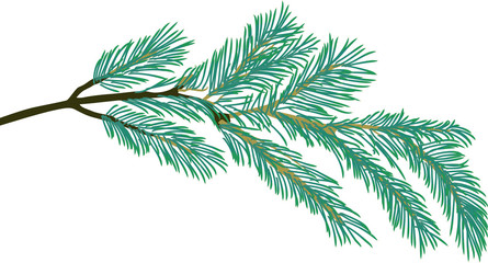 pine tree one blue branch isolated illustration