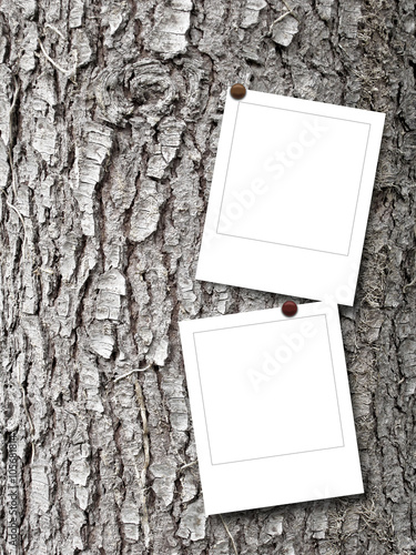 Close Up Of Two Square Blank Photo Frames With Pins On Grey Tree