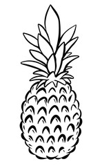 Pineapple hand drawn isolated