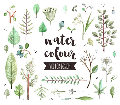 Plant Leaves Watercolor Vector Objects