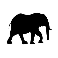 silhouette of female elephant