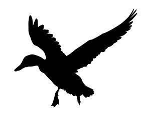 Vector duck flying. Silhouette