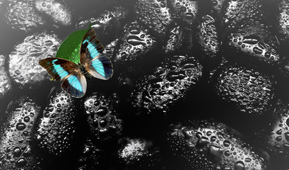 Spa concept. Butterfly on a black wet stones.