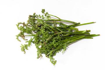 A bunch of fern bracken