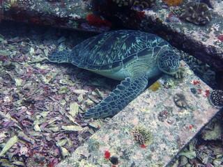 Turtle on granite blocks