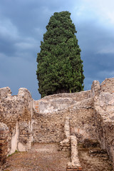 Cypress on ruins