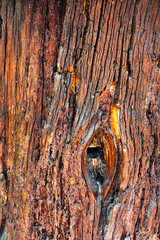 Aged tree trunk background. Hollow wood