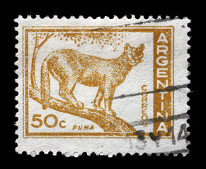 Stamp printed in the Argentina shows Puma, Cougar, Puma Concolor, circa 1960