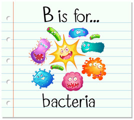Flashcard alphabet B is for bacteria