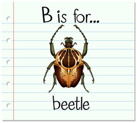 Flashcard letter B is for beetle