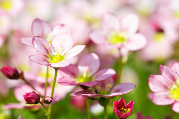 Beautiful spring flowers,floral background,macro photography,sma