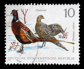 Stamp printed in GDR shows Pheasant, Phasiaus colchicus, Bird issue, circa 1968