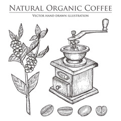 Coffee branch plant with leaf, berry, bean, fruit, seed, mill. Natural organic caffeine drink. Hand drawn vector illustration on white background.