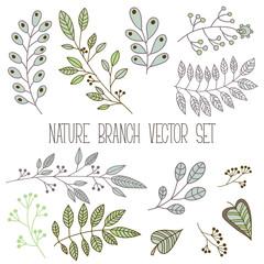 Branch, leaf, plant element nature set. Vector collection, floral illustration