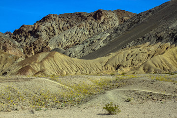 Death Valley National Park colorful bluffs and wildflowers