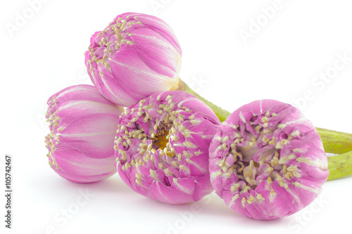 Pink Lotus Flowers Bouquet Isolated On White Background Stock Photo