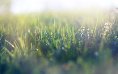 abstract defocused spring grass with sunlight