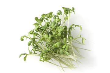 Gartenkresse; Lepidium Sativum