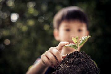 Point to seedling