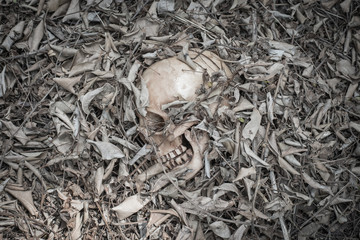 skull human in the dry leaf