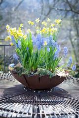 schönes Blumenegesteck im Frühling