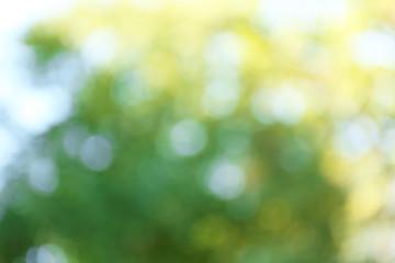 Blurred autumn background