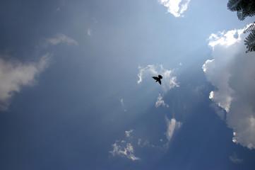 Silhouette of Bird on Sky