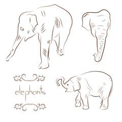 Elephants set. Sketch vector illustrations.