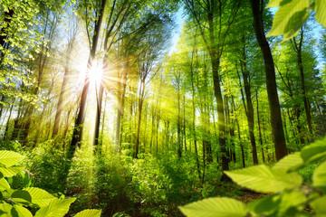 Dziki las w blasku słońca