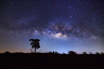 Silhouette of tree and beautiful milkyway on a night sky. Long e