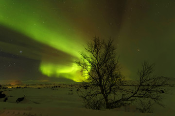 Aurore Boréale sur un petit arbre dans la neige