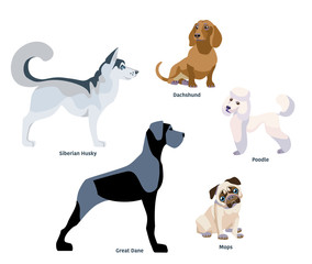 Illustration of dogs breed isolated on white Background