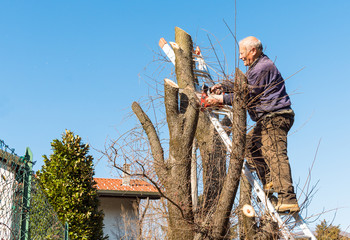 Man on the ladder is cutting tree with chainsaw
