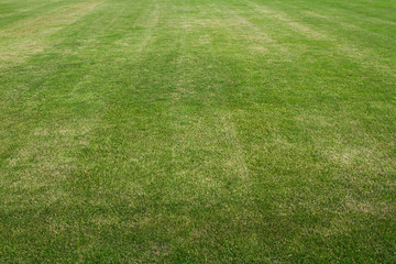 Grass on the football field