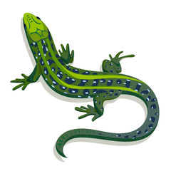 Green lizard, vector illustration