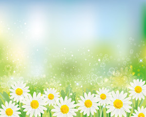 background of daisy
