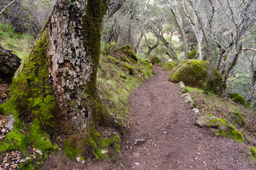 Winter Time Pinnacles National Park Forest Trail California USA