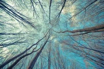 Gałęzie drzew na tle błękitnego nieba