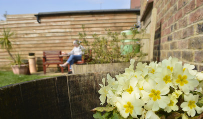 Mature person sat in the garden with Primroses on a nice summer's day.