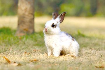野原で遠くを見つめる子ウサギ