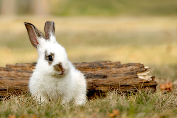 枯れ木の前に座る子ウサギ
