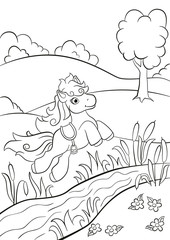 Coloring pages. Little cute pony jumping over the river on the field. She is beautiful and smiling.