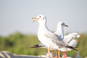 Seagulls standing on the fence on blurred trees background